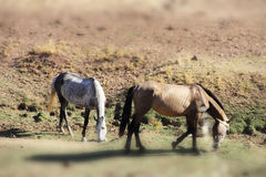 Andalusian horses on pasture Royalty Free Stock Image