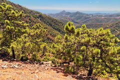 Andalusian landscape Stock Images