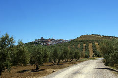 Andalusian landscape with olives trees. Stock Photography