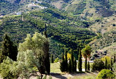 Andalusian Landscape Royalty Free Stock Image