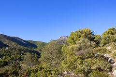 Andalusian mountain pine woodland Royalty Free Stock Images