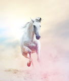 Andalusian stallion in dust Royalty Free Stock Images