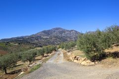 Andalusian track through olive groves to mountains Royalty Free Stock Photography