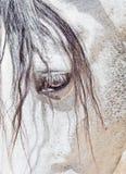 andalusian white för purebred för closeupögonhäst arkivbild