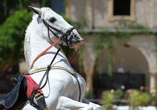 Andalusian white horse Royalty Free Stock Photo