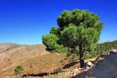 Andalusien in spain. Tree in Andalusien spain stock image