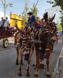 Andalusische angemessene Pferde Stockbild