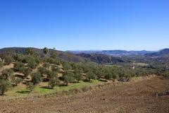 Andalusisches Ackerland mit Oliven und Bergen Lizenzfreie Stockbilder