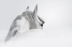 Andalusisches Pferd in einem Nebel Stockfoto