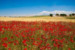 A Andaluzia. Spain Fotografia de Stock Royalty Free