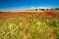 A Andaluzia. Spain Imagem de Stock Royalty Free