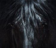 Andaluzyjski czarny koń z długą grzywą zamknięty portret zdjęcie royalty free
