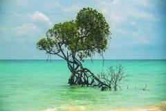 Kalapattar beach at Andaman and nicobar islands Stock Photography