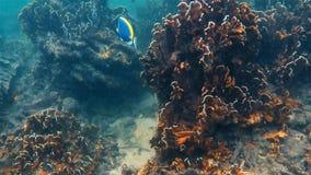 Andaman morze podwodny zbiory
