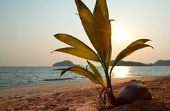 Andaman sea Stock Image