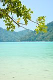 Andaman Sea and branches of tree Stock Image