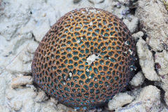 Andaman sea at low tide,Coral,Asia, Thailand,blurry Stock Images