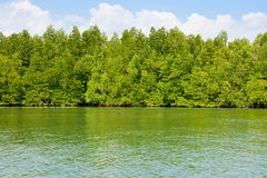 Andaman sea mangrove forest, Thailand Royalty Free Stock Image