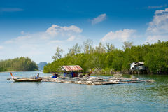Andaman sea mangrove forest, Thailand Royalty Free Stock Photography