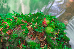 Andaman Thailand outdoor photography of waterfall in rain jungle forest. Trees, PHUKET, Royalty Free Stock Photo