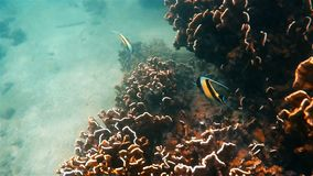 Andamanoverzees onderwater stock video