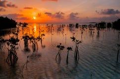 Andando alla deriva sul Sun Fotografie Stock Libere da Diritti