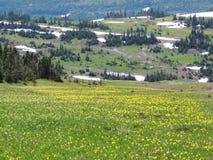 Andando alla strada di Sun, vista di paesaggio, campi di neve in Glacier National Park intorno a Logan Pass, lago nascosto, tracc immagini stock