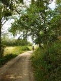 Andando in bicicletta nella natura Fotografia Stock