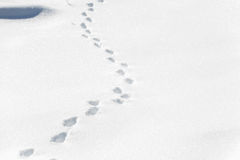 Andando e deixando pegadas na neve fotos de stock royalty free