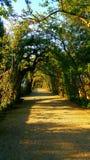 Andando nos jardins de Boboli de Florença, Itália fotografia de stock royalty free