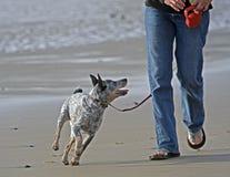 Andando o cão ao longo da praia imagens de stock royalty free