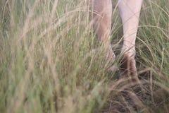 Andando o trajeto descalço Fotografia de Stock