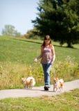 Andando os cães Fotos de Stock