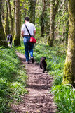 Andando os cães Fotografia de Stock Royalty Free