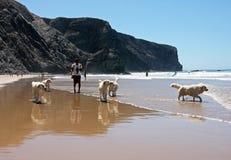 Andando os cães em Lagos, Portugal Fotos de Stock