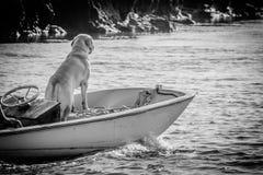 Andare canino per un giro della barca fotografia stock libera da diritti