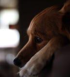 Andare incontro cucciolo Immagini Stock