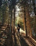 Andarilho de Forrest foto de stock