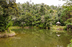 Andasibe Rainforest in Madagascar Royalty Free Stock Photography