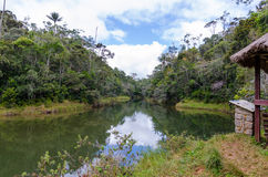 Andasibe Rainforest in Madagascar. Typical Landscape in Andasibe Rainforest in Madagascar Stock Photo