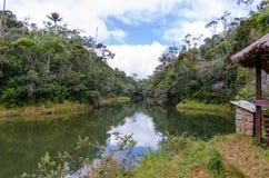 Andasibe Rainforest in Madagascar Stock Photo
