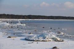 Ande av vintern Arkivfoton