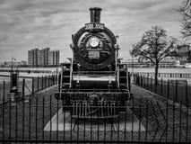 Ande av Windsor #5588 Royaltyfri Bild