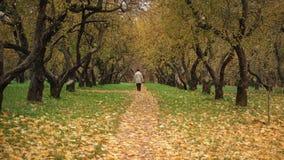 Ande no parque no tempo do outono com fundo colorido video estoque
