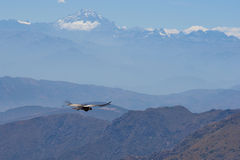 Free Andean Condor Stock Photography - 49742812