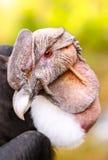 Andean Condor Close Up Stock Photos