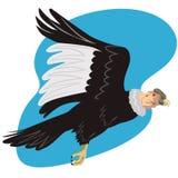 Andean condor in flight. Vector art on an Andean condor stock illustration