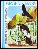 Andean Condor Vultur gryphus, Philatelic Exhibitions serie, circa 1985 royalty free stock photography