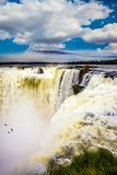 Andean condors fly above the water. The rainy season. Devil`s Throat is the most grandiose part of the Iguazu Falls. Andean condors fly above the roaring water royalty free stock images