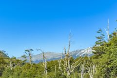 Andean Patagonia Landscape, Aysen, Chile. Andes patagonia landscape scene at aysen district, Chilea stock photos